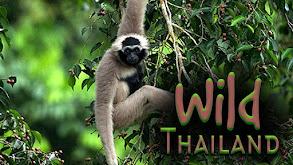 Wild Thailand thumbnail
