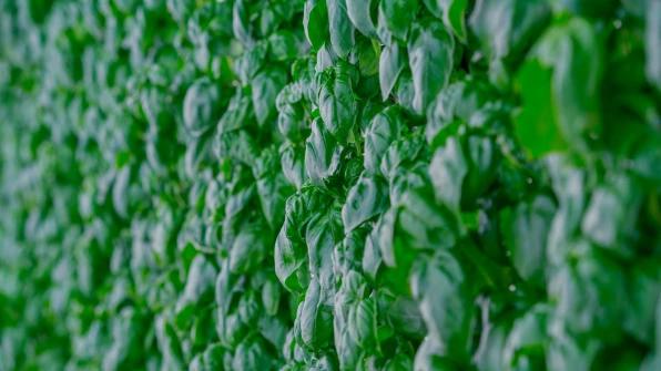 Стена овощей Planty