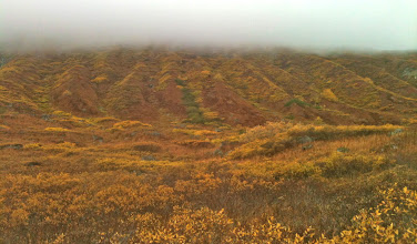 Photo: Reed Lakes Trail: Low-lying cloud + fall tundra foliage