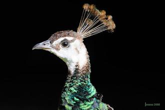 Photo: Federvieh in der Naturfotografie: http://goo.gl/ITvFrA
