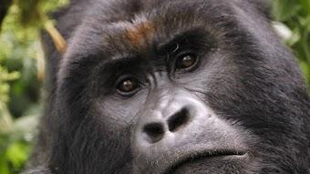 Battle for Virunga
