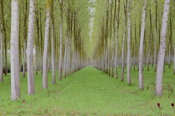 bosco programmato di s_ornella