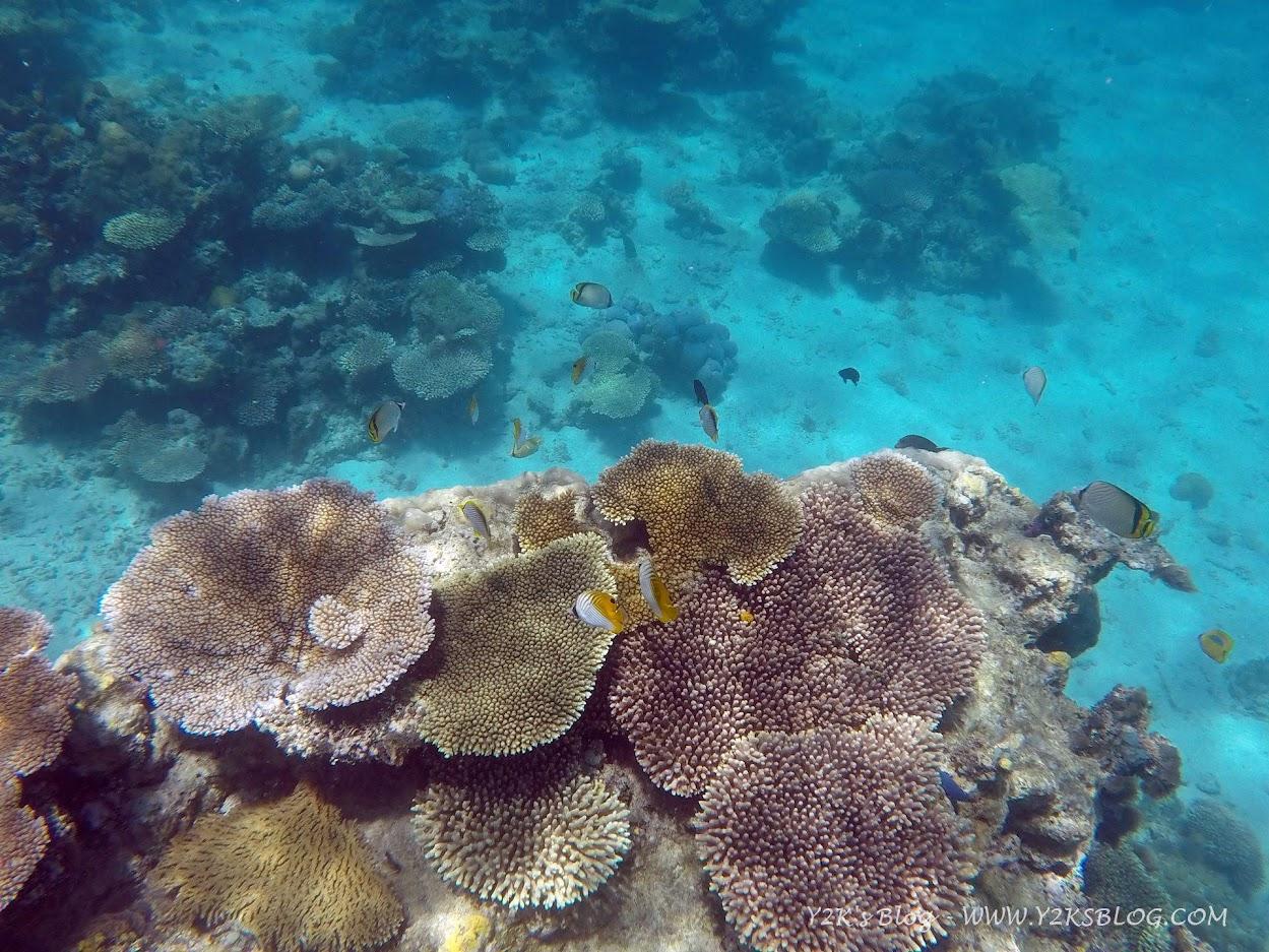 I coralli di Tatafa - Ha'apai