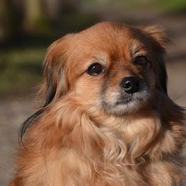 Musing by Els He - Animals - Dogs Portraits ( musing, els he, outside, dogportrait, elshe, portrait, dog,  )