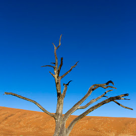 DEAD VALLEY TREE by Issi Potgieter - Landscapes Deserts ( dead valley, dead tree, dead, namibia,  )
