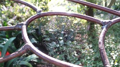 Photo: SpiderWeb