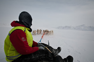 Photo: My driver hanging back as we take it nice and easy across the ice on a lake, east of Ilulissat, in the Akinnaq mountains.