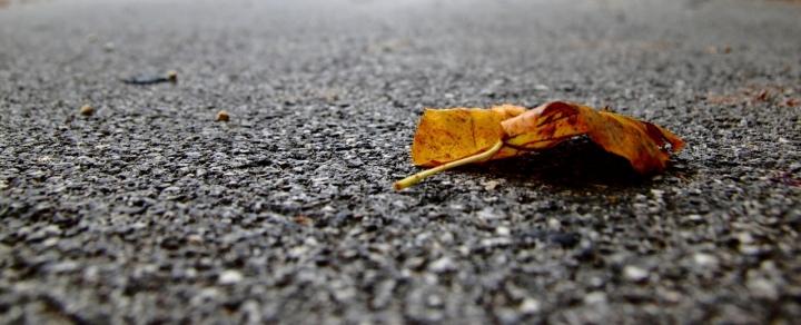 Autumn... di stefanoholden