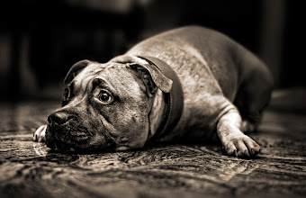 Photo: I guess she deserves place in my portfolio, she is my sisters dog Olga. :)