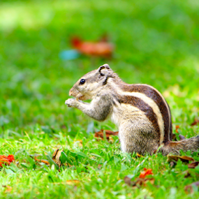 Lunch Time by Arnab Choudhury - Animals Other