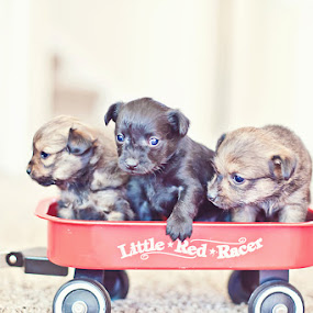 ♪♫There were three in the bed and the little one said, roll over...roll over♫♪ by Aim Huston - Animals - Dogs Puppies