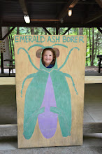 Photo: Emerald ash borer at Jamaica State Park by Linda Carlsen-Sperry