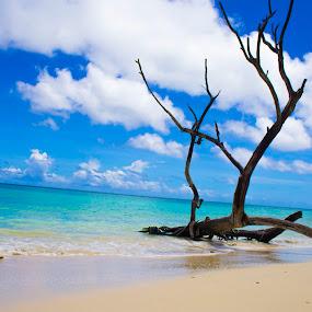Clear water beaches by Chandrasekhar Yanamandra - Landscapes Beaches ( coastline, ocean, island, beach, wood )