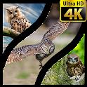 Wallpapers Owl 4K UHD icon
