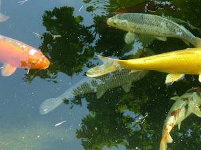 Photo: 'dansende' vissen
