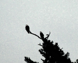 Photo: Eagles Across from Camp
