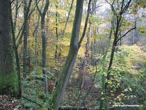 Photo: 'Thuis komen' in de bossen