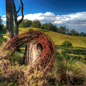 by Pat Kiellor - Landscapes Prairies, Meadows & Fields