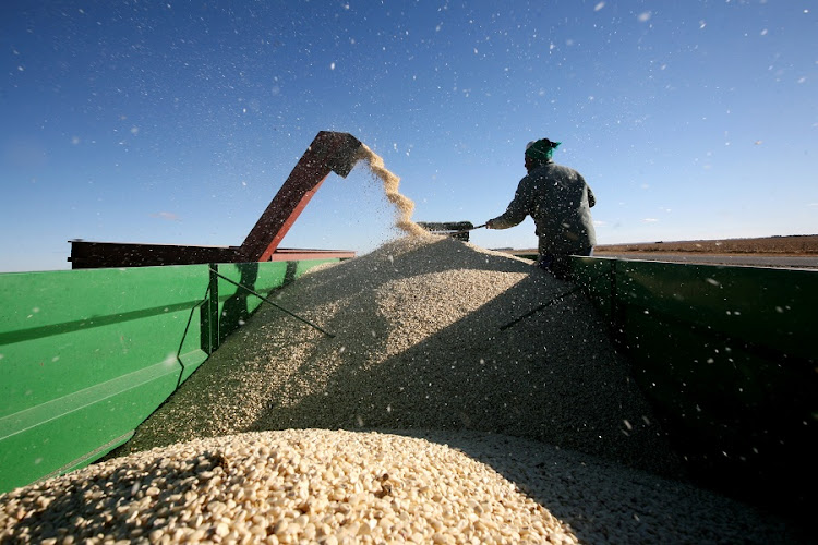 Maize. Picture: FINANCIAL MAIL