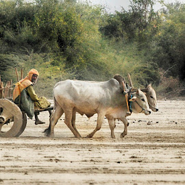 by Abdul Rehman - Transportation Other (  )