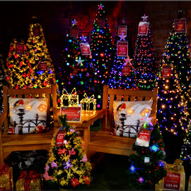 christmas trees by Nic Scott - Public Holidays Christmas ( festive, christmas, christmas trees,  )
