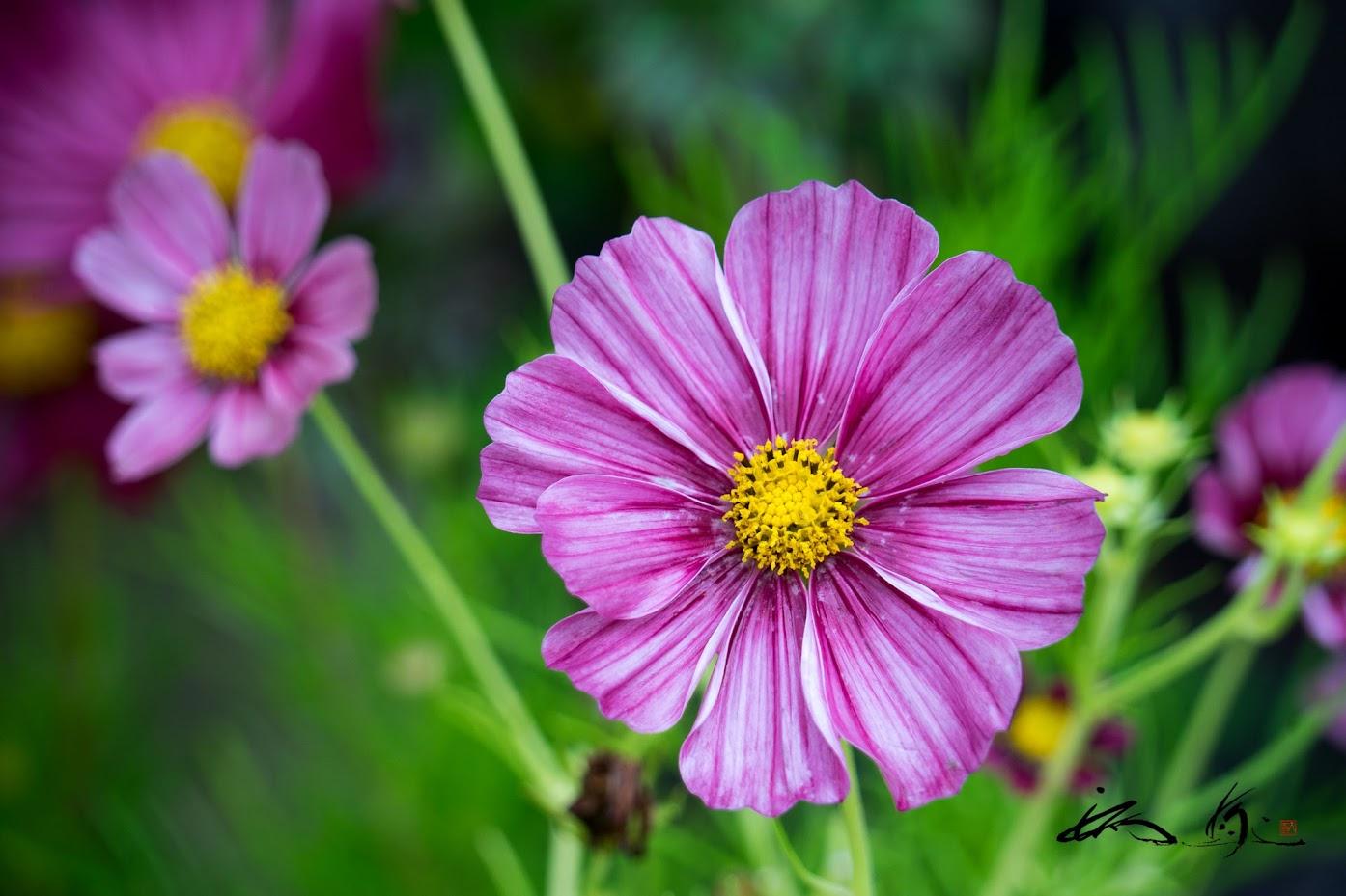 花いっぱい・花づくりの町