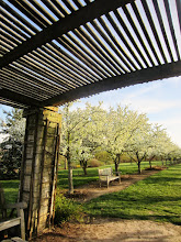 Photo: Looking at the Crab Apple Alley in bloom from under a gazebo at Coxe Arboretum and Gardens Metropark in Dayton, Ohio.