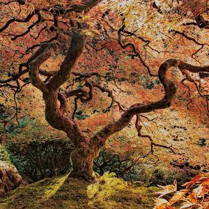 Tree Final2.jpg