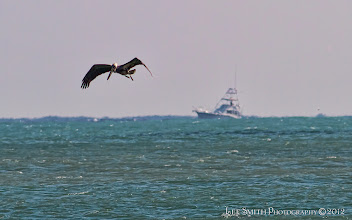 Photo: A Pelican looking for breakfast