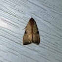 Wedgling Moth