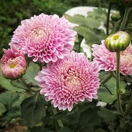 by Soumyadip Ghosh - Flowers Flowers in the Wild