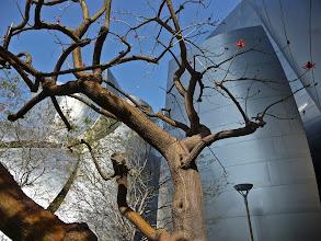 Photo: Disney Hall, Los Angeles