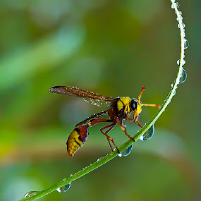 shower by Faiq Alfaizi - Animals Insects & Spiders