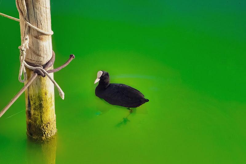 Green water di CY