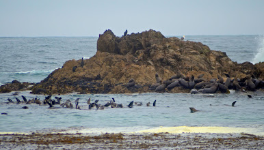 Photo: 71. You can hear all these sea lions barking well before you see them up close. What a noisy bunch! As I mentioned earlier, many of the ones in the water are sticking their fins up to cool off.