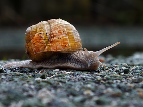 snail mail by Brut Carniollus - Animals Other ( mail, collage, snail, digital, conceptual, animal, motion, animals in motion, pwc76, World, Beauty, Beautiful, Representing, Special, land, device, transportation,  )