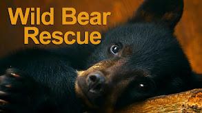 Wild Bear Rescue thumbnail