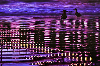Photo: Reflections of the Santa Monica Pier at twilight.