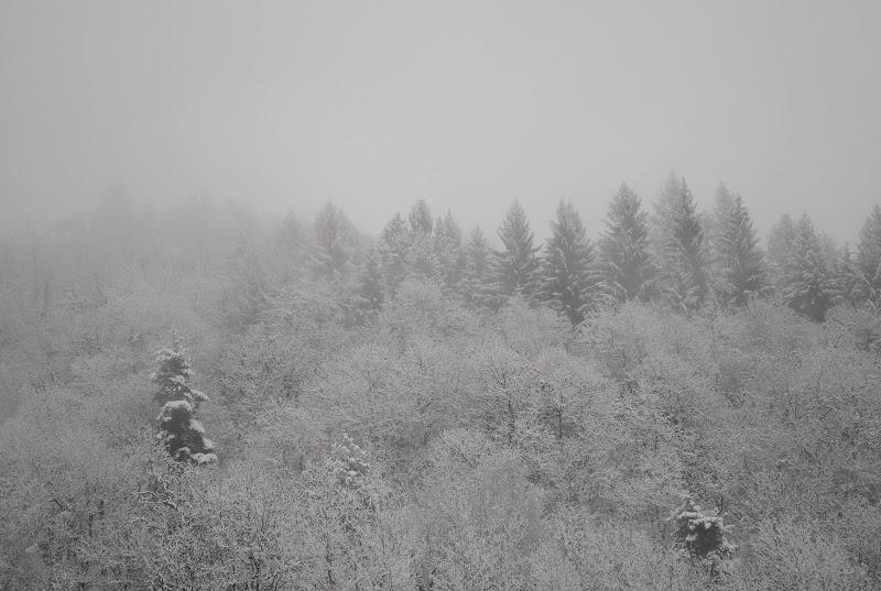 Flora invernale di Billy_