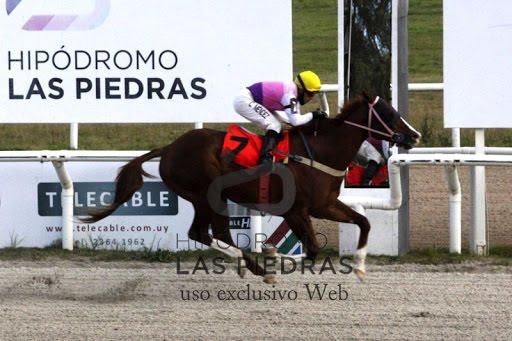 El Poderoso (Asidero) se adjudicó Condicional (1400m-Arena-LPI). - Staff ElTurf.com