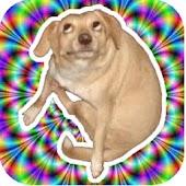 Narcotic Dog