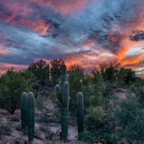 Sunset Tonight by Charlie Alolkoy - Landscapes Deserts ( clouds, desert, sky, sunset, arizona, tucson, saguaro, cactus )