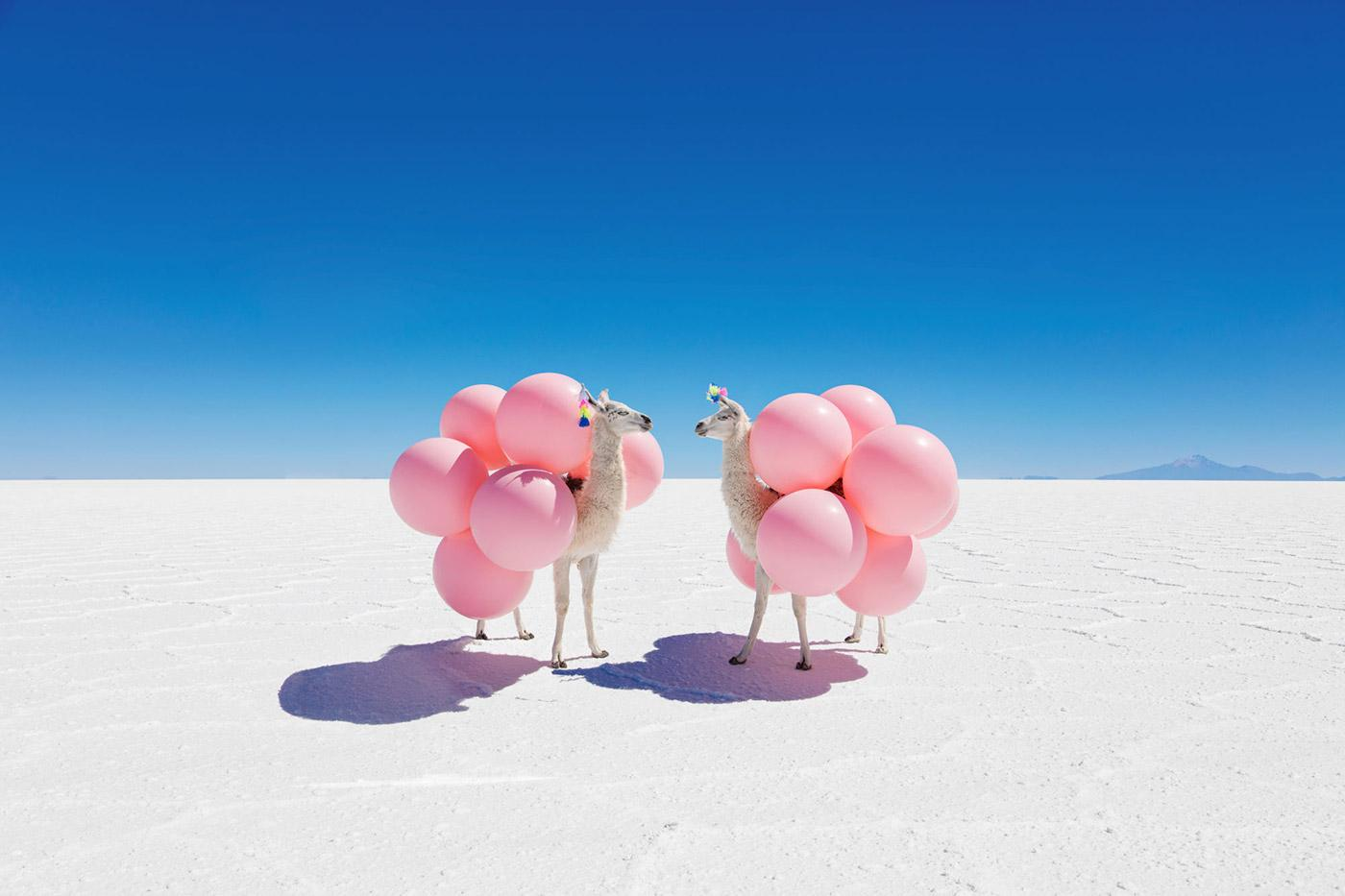 Macintosh HD:Users:Tessa:Dropbox:*Blog Images* (1):NOVEMBER 2017:10 New Releases:*Resized*:Two-Llamas-with-Pink-Balloons.jpg