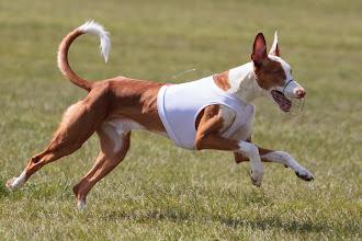 Photo: Coursing, Spitzerberg