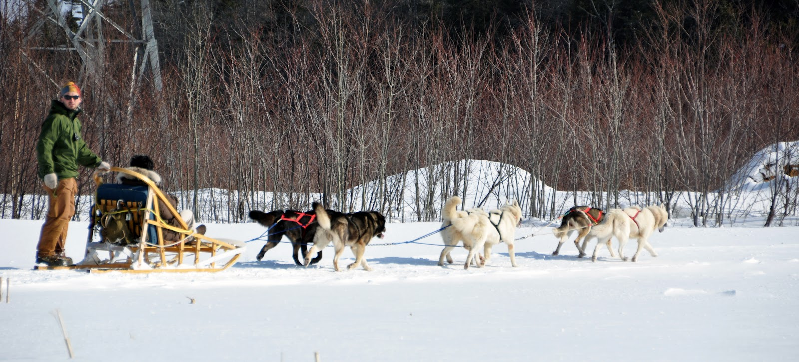 Dog_sled_quebec_2010.jpg