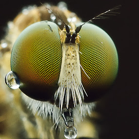 Green Eyes by James Ac - Animals Insects & Spiders