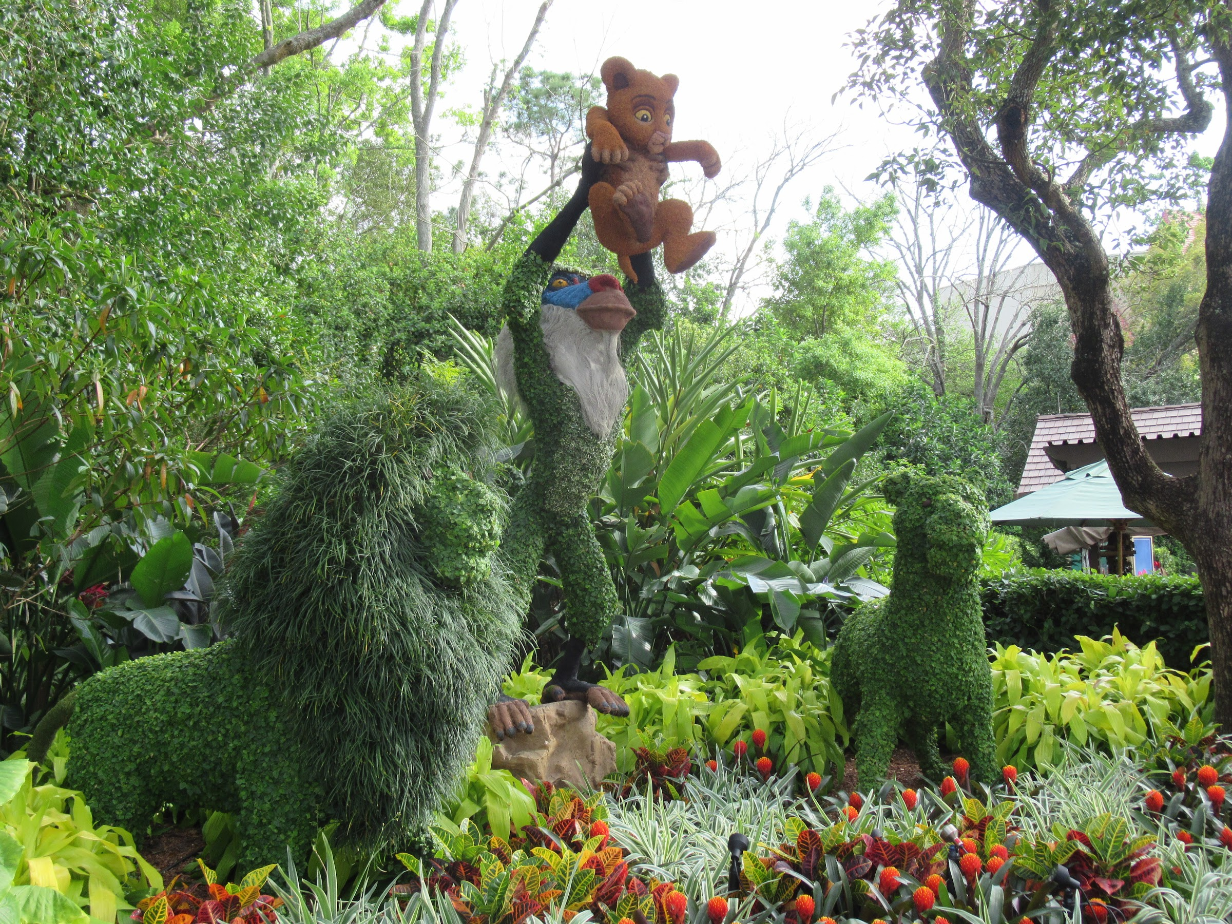 The Lion King Topiary at Epcot's Flower and Garden Festival