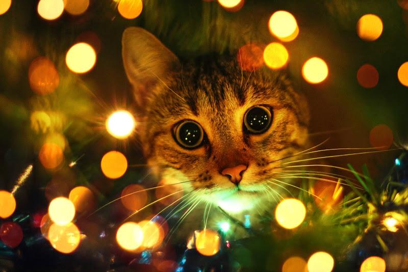 Intruso dell'Albero di Natale di guazzini.com