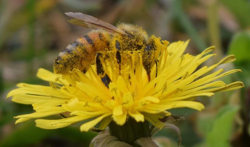 ape in fiore di eskerica