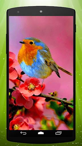 Cute Robin Live Wallpaper